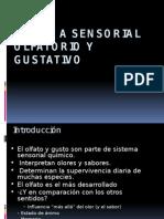 Sistema Sensorial Olfato y Gusto[2]
