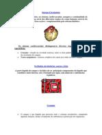 Sistema Circulatóri2