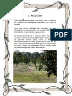 Proceso de Producción de La Naranja