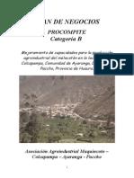 Plan de Negocio Procompite 2013
