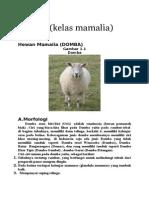 pencernaan domba 1