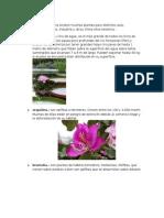 Flora de loreto