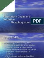 Respiratory chain and oxidative phosphorylation