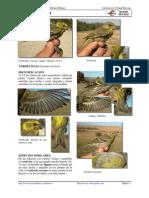 Verdecillo  Ficha Ibercaja.pdf