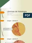Lâminas de Histologia S2M4