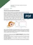 Cell_Nanodiamond_interaction_research.pdf