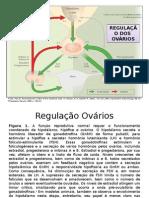 regulação