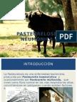 Pasteurelosis Neumonica