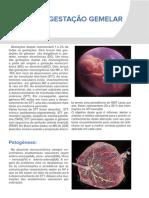 Folder Febrasgo Gestação gemelar