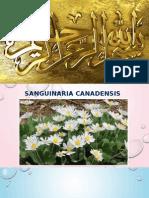 Sanguinaria Canadensis.pptx