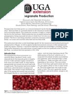 pomegranate.pdf