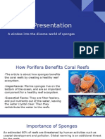 porifera slides
