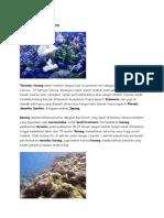 Ekosistem Terumbu Karang