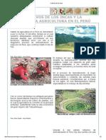 Texto a p 44_Cultivos de Los Incas