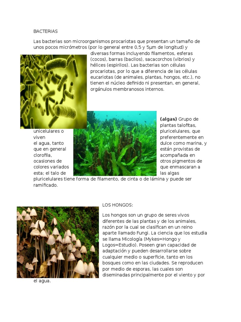 algas hongos y las bacterias