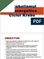 Metabolismul 1ciclu-Krebs (1)