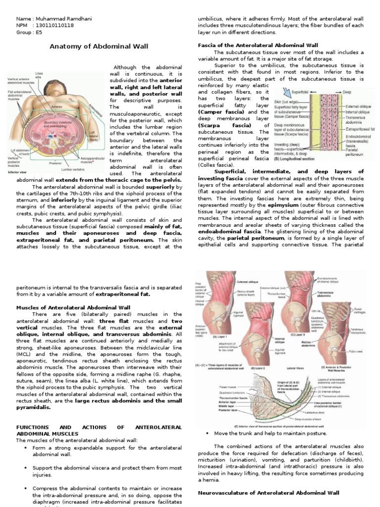 Anatomy of Abdominal Wall | Abdomen | Pelvis