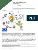 CDC - Ascariasis - Biology