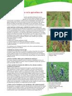 05-malezas1 SAGARPA.pdf