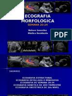 originalecografiamorfologica-110501150536-phpapp01