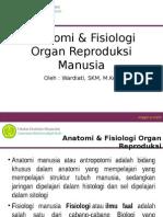 Pertemuan Ke II & III (Anatomi & Fisiologi Organ Reproduksi Manusia)