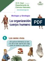 La Organizacion Del Cuerpo Humano
