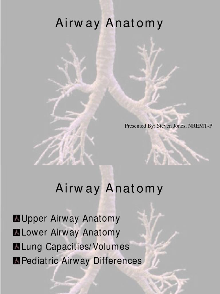 Airway Anatomy | Respiratory Tract | Lung