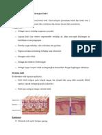 histologi kulit manusia