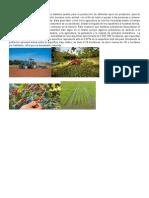 agricultura en el pais