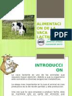 Alimentacion de La Vaca Lactante