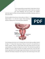 Anatomi Fisiologi Prostat Word