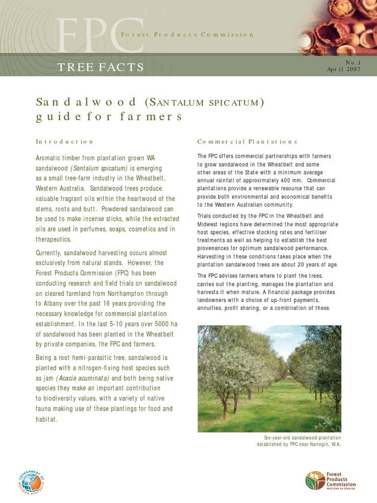 Sandalwood Fact Sheet 1 Sml | Seed | Soil
