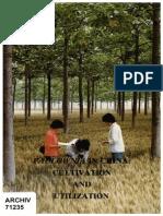 Cum cultivi Paulownia , culturi intercalate71235