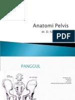 Anatomi Pelvis