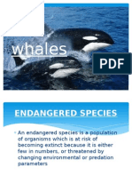 Whales presentation