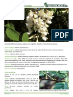 Robinia Pseudoacacia Torrinha