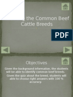 learning the common beef cattle breeds