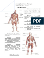 muscul0os_estudo