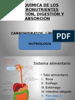 metabolismo nutrientes 2015