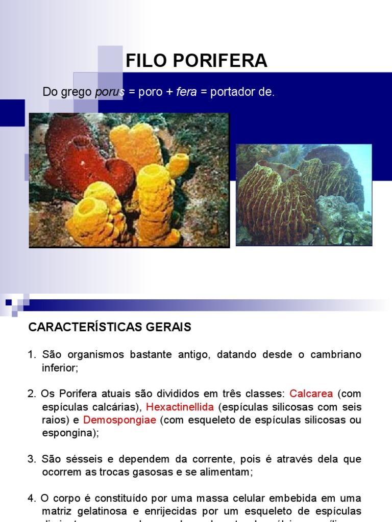 Excepcional Anatomía De Porifera Regalo - Anatomía de Las ...