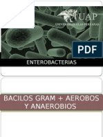 Bacilos Grampositivos y Negativos Enterobacterias
