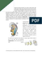 Conclusiones Caso 10 Morfofisiología 2