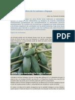 Cultivo de La Lechosa o Papaya