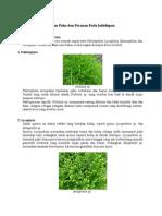Klasifikasi Tumbuhan Paku Dan Peranan Pada Kehidupan