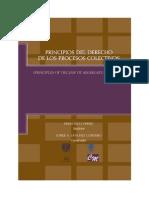 PrincipiosdelDerechodelosProcesosColectivos USA - UNAM Verbic