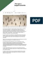 De Dengue a Zika_ Por Que o Mosquito Aedes Aegypti Transmite Tantas Doenças_ - Notícias - Saúde