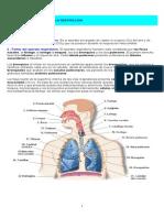 El Aparato Respiratorio y La Respiración Marco Teorico
