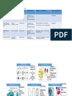 Parasitologia Del Tracto Gastrointestinal