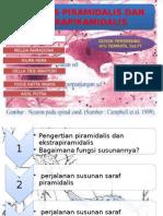 extrapiramidalis