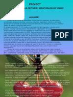 documents.tips_prezentare-sirop-de-visine (1).pptx